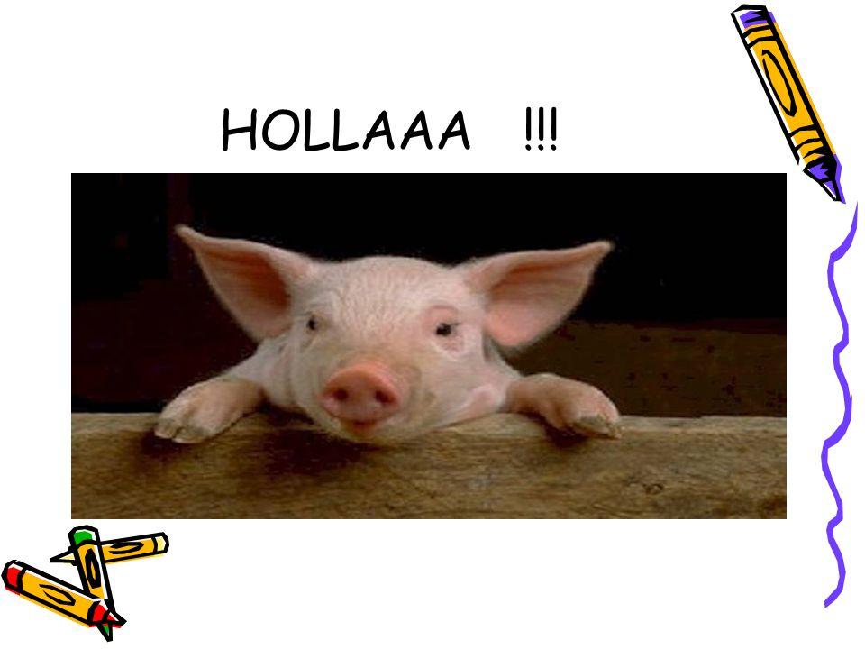 HOLLAAA !!!