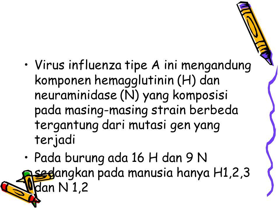 Virus influenza tipe A ini mengandung komponen hemagglutinin (H) dan neuraminidase (N) yang komposisi pada masing-masing strain berbeda tergantung dari mutasi gen yang terjadi