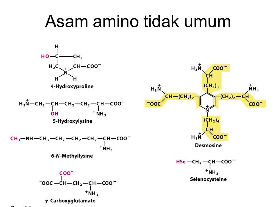 Asam amino tidak umum