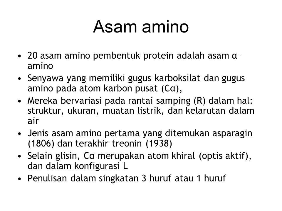 Asam amino 20 asam amino pembentuk protein adalah asam α–amino