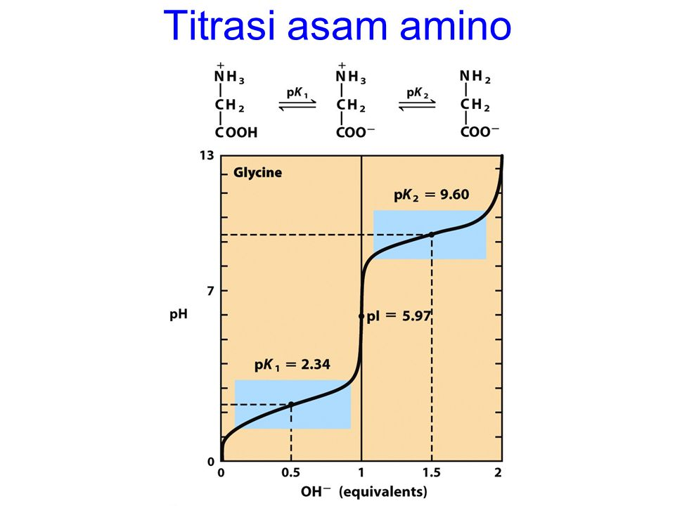 Titrasi asam amino