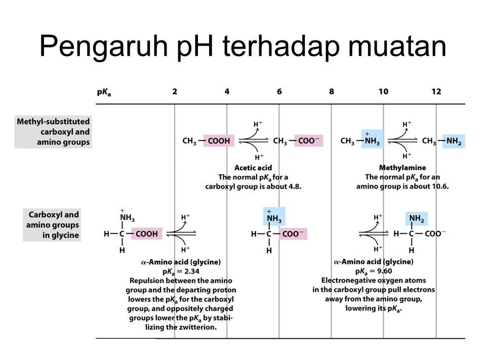 Pengaruh pH terhadap muatan