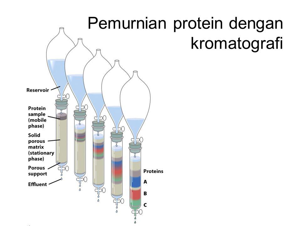 Pemurnian protein dengan kromatografi