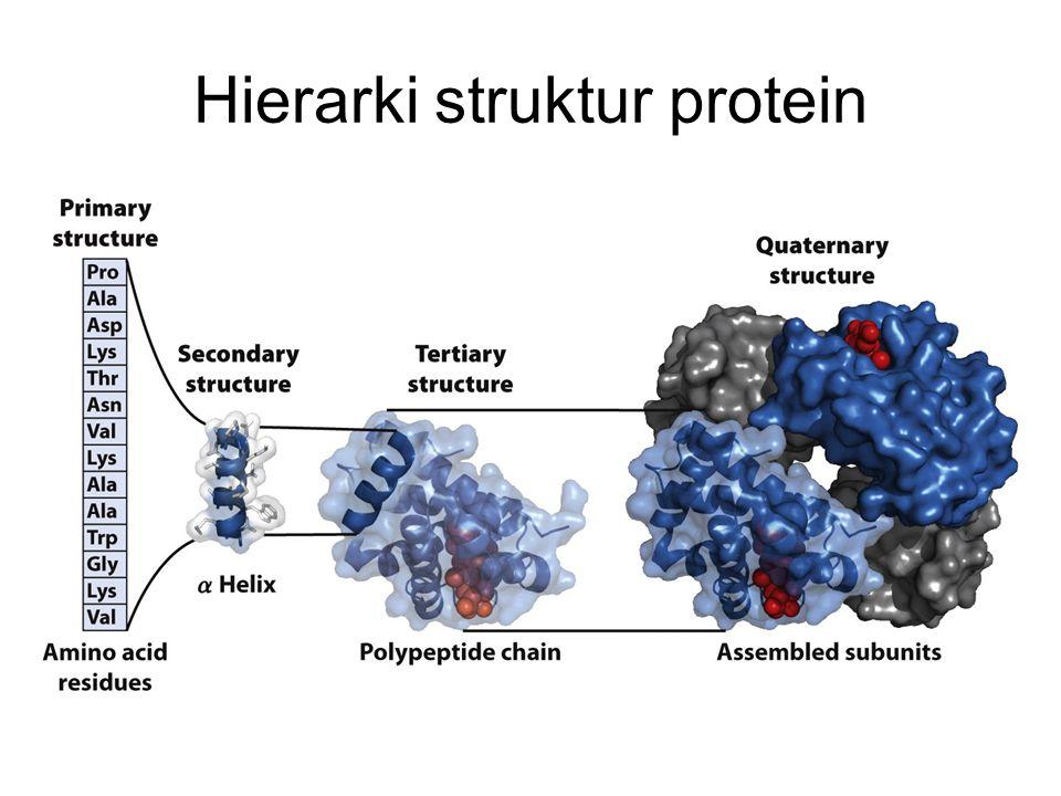 Hierarki struktur protein