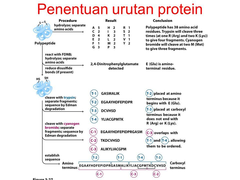 Penentuan urutan protein