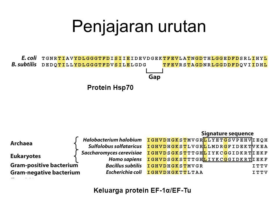 Penjajaran urutan Protein Hsp70 Keluarga protein EF-1α/EF-Tu