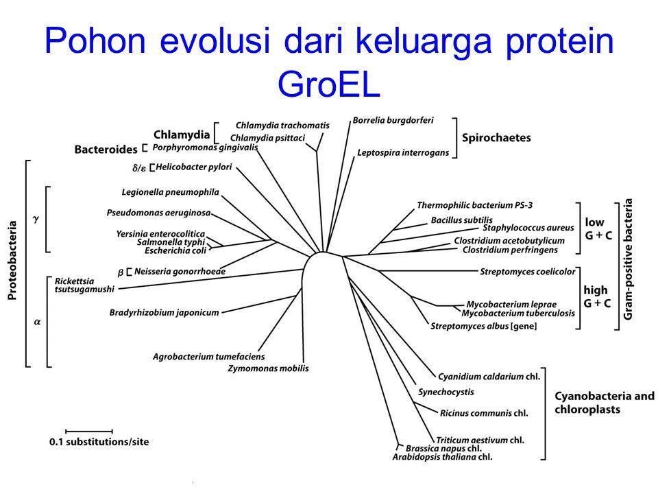 Pohon evolusi dari keluarga protein GroEL