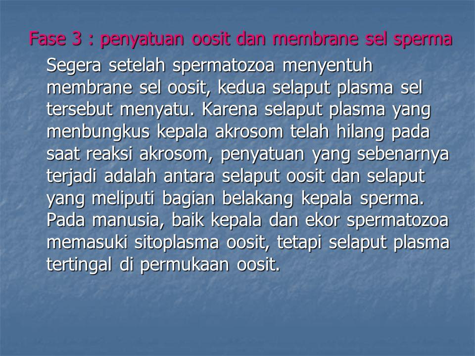 Fase 3 : penyatuan oosit dan membrane sel sperma