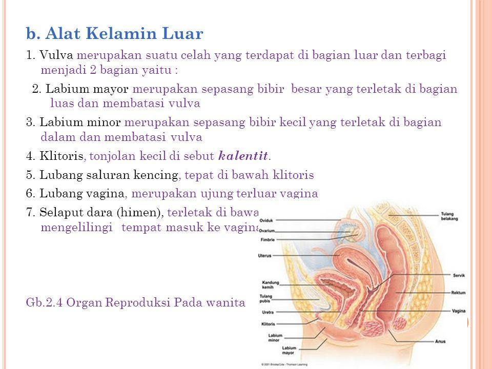 b. Alat Kelamin Luar 1. Vulva merupakan suatu celah yang terdapat di bagian luar dan terbagi menjadi 2 bagian yaitu :