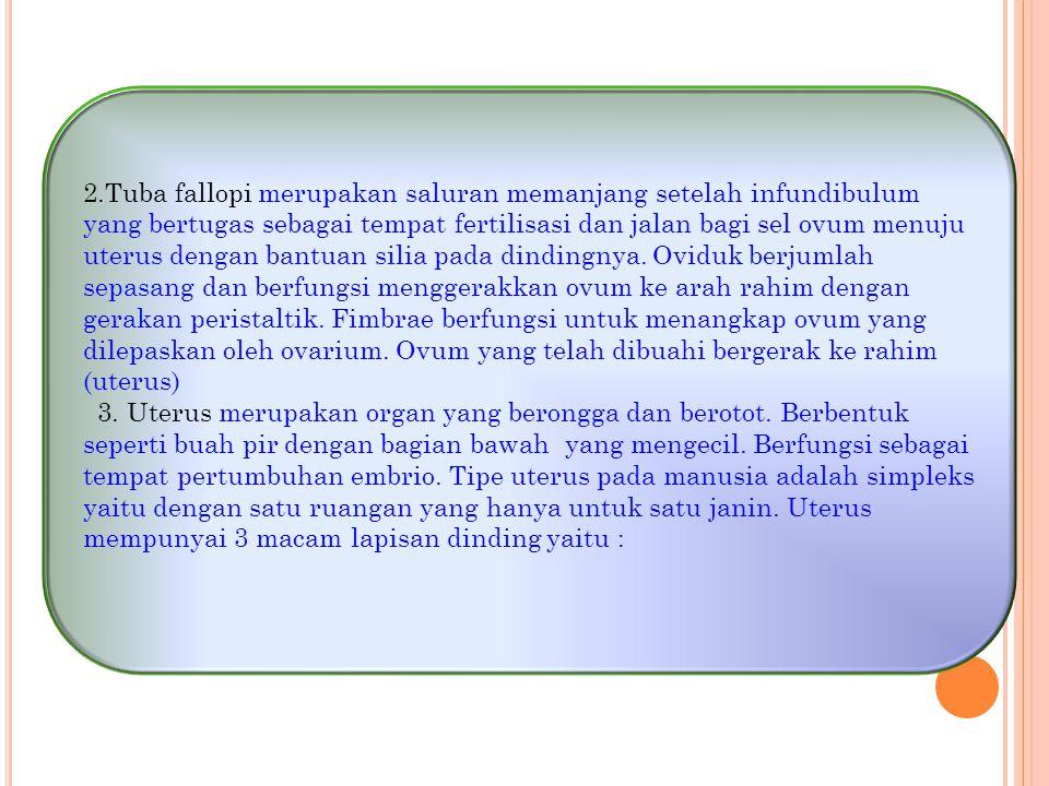 2.Tuba fallopi merupakan saluran memanjang setelah infundibulum yang bertugas sebagai tempat fertilisasi dan jalan bagi sel ovum menuju uterus dengan bantuan silia pada dindingnya. Oviduk berjumlah sepasang dan berfungsi menggerakkan ovum ke arah rahim dengan gerakan peristaltik. Fimbrae berfungsi untuk menangkap ovum yang dilepaskan oleh ovarium. Ovum yang telah dibuahi bergerak ke rahim (uterus)