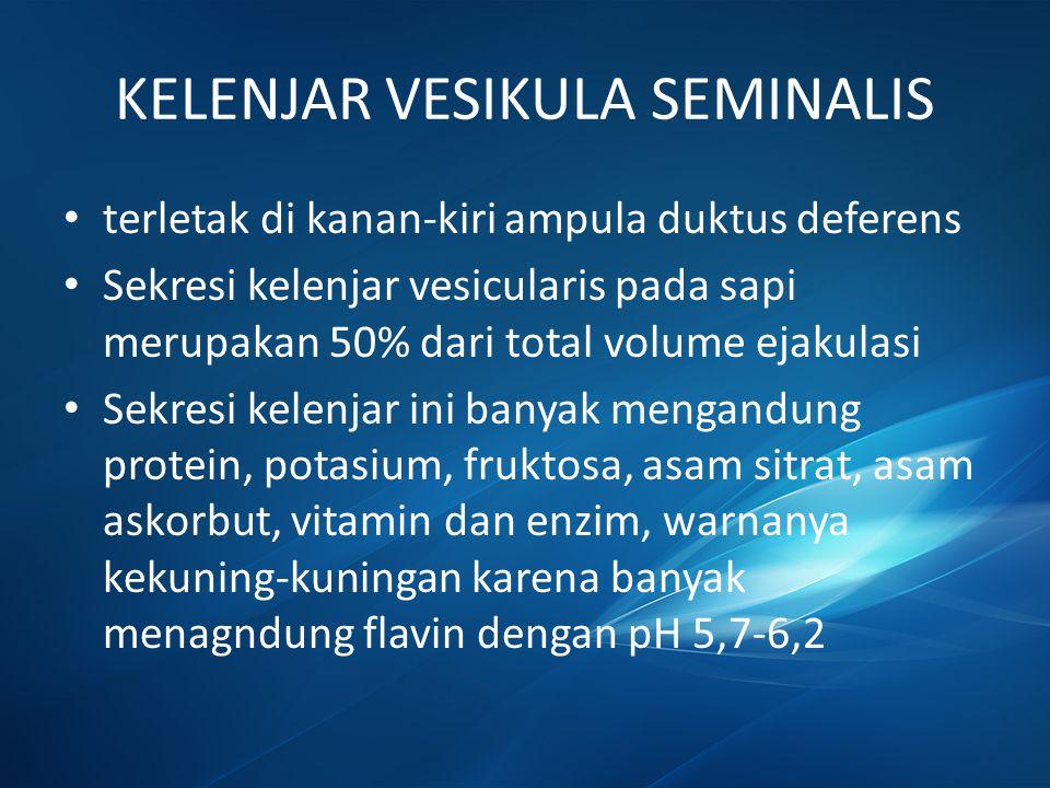 KELENJAR VESIKULA SEMINALIS
