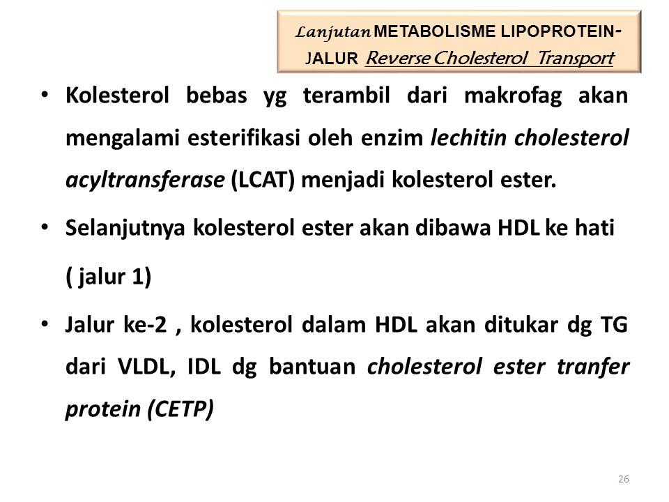 Lanjutan METABOLISME LIPOPROTEIN- JALUR Reverse Cholesterol Transport