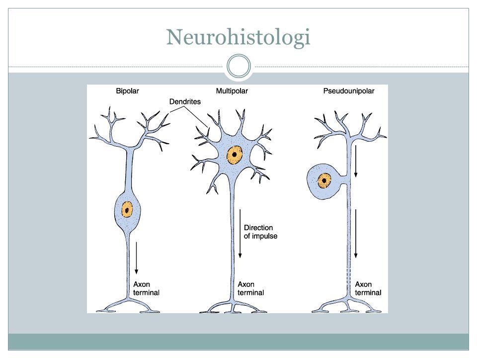 Neurohistologi