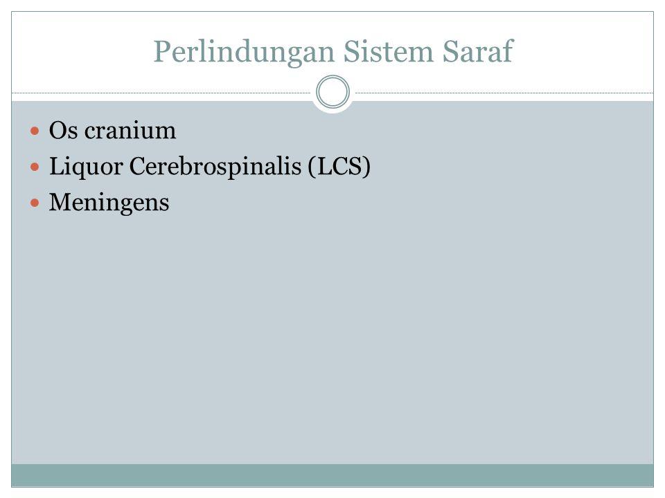 Perlindungan Sistem Saraf