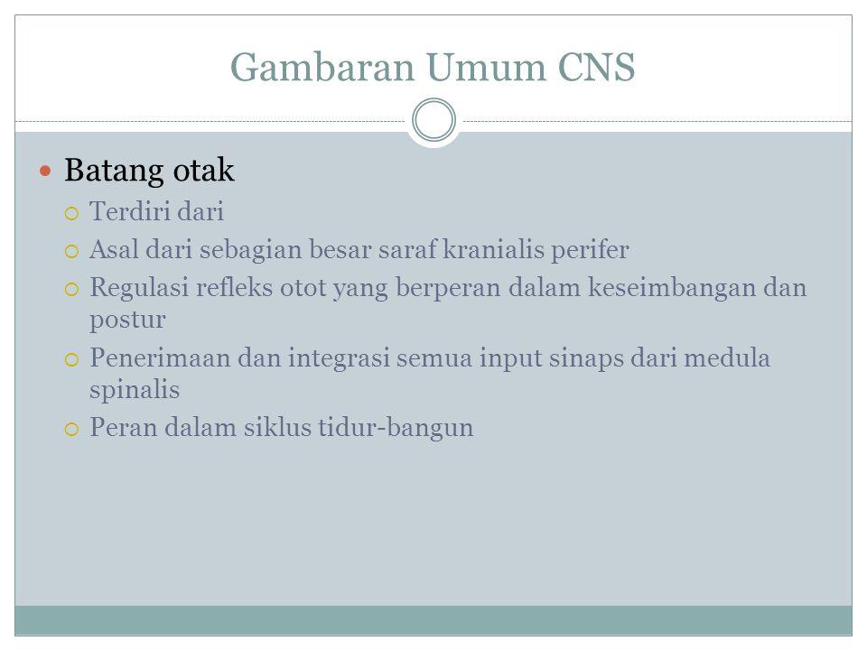 Gambaran Umum CNS Batang otak Terdiri dari