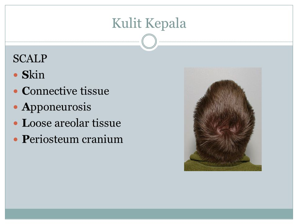 Kulit Kepala SCALP Skin Connective tissue Apponeurosis