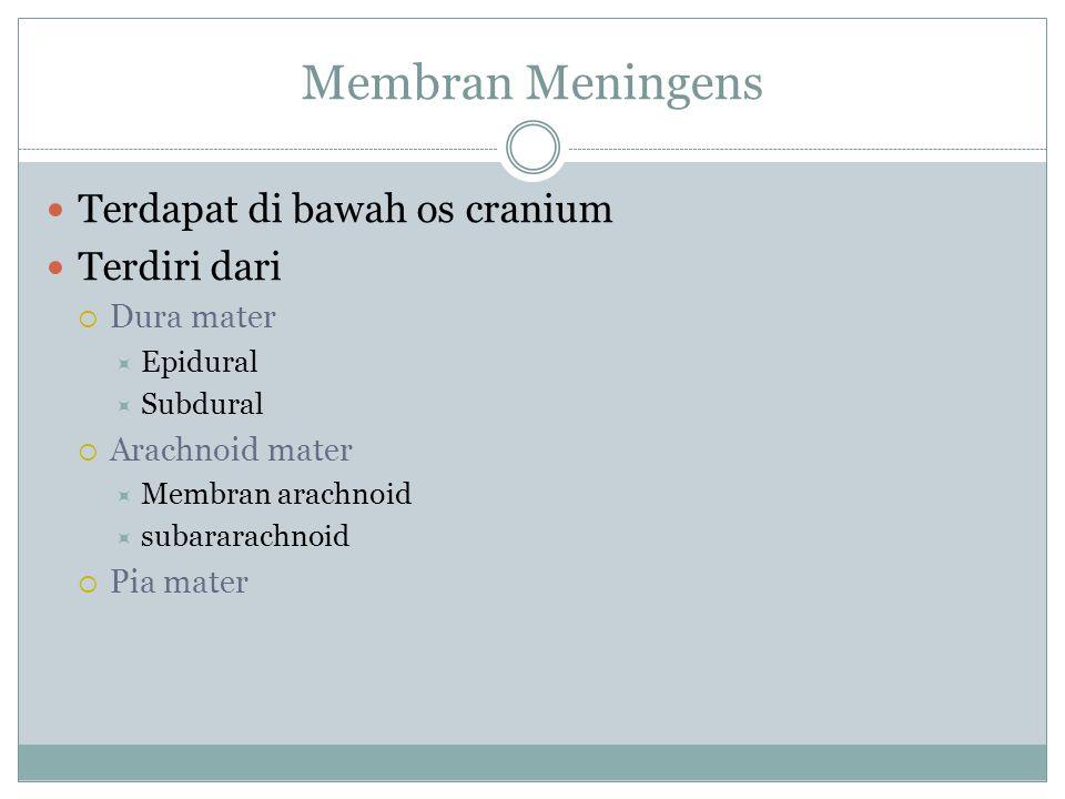 Membran Meningens Terdapat di bawah os cranium Terdiri dari Dura mater