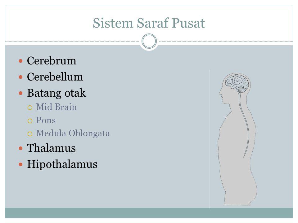 Sistem Saraf Pusat Cerebrum Cerebellum Batang otak Thalamus