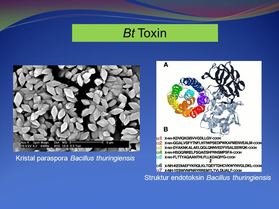 Bt Toxin Kristal paraspora Bacillus thuringiensis