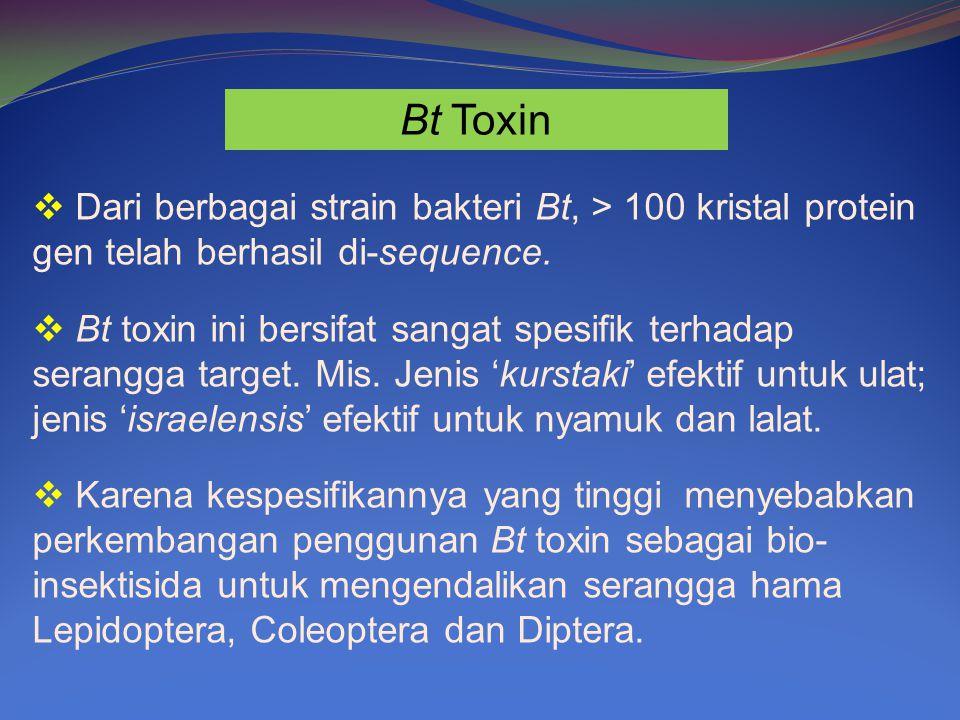Bt Toxin Dari berbagai strain bakteri Bt, > 100 kristal protein gen telah berhasil di-sequence.