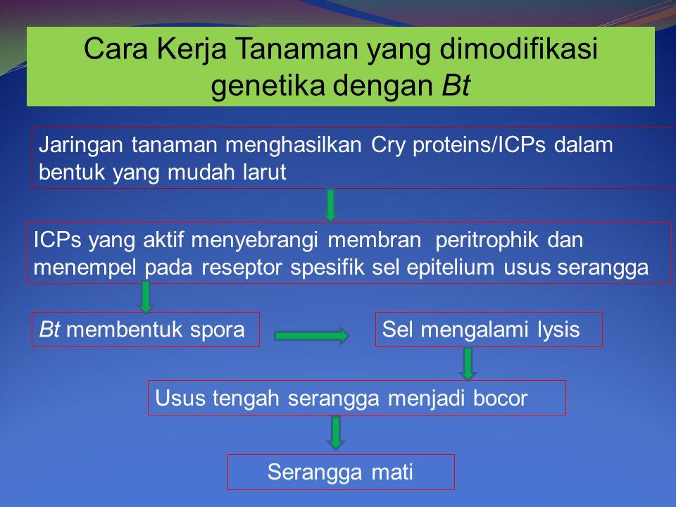 Cara Kerja Tanaman yang dimodifikasi genetika dengan Bt