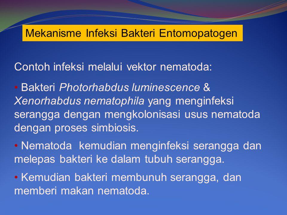 Mekanisme Infeksi Bakteri Entomopatogen
