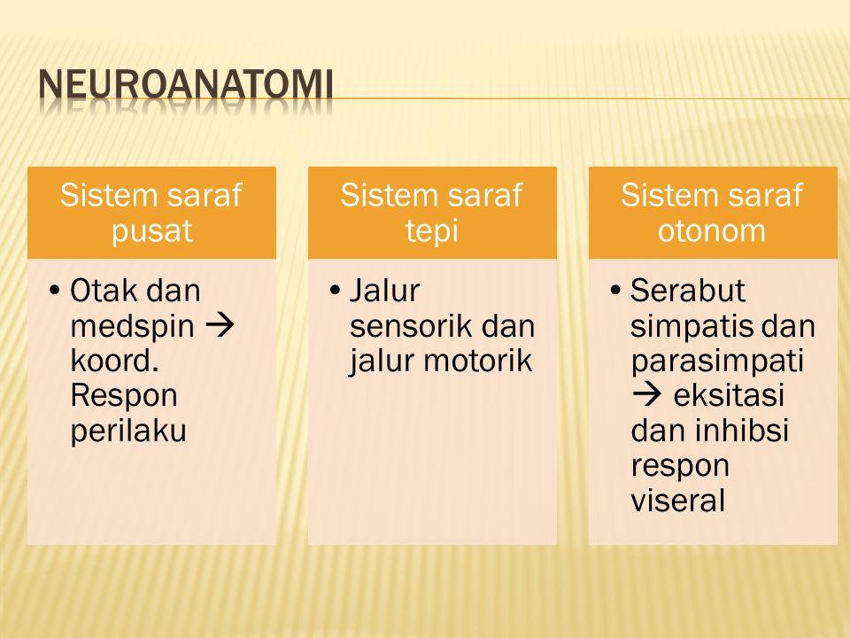 Neuroanatomi Sistem saraf pusat
