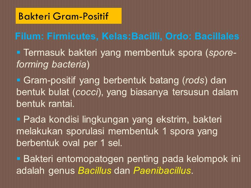 Bakteri Gram-Positif Filum: Firmicutes, Kelas:Bacilli, Ordo: Bacillales. Termasuk bakteri yang membentuk spora (spore- forming bacteria)
