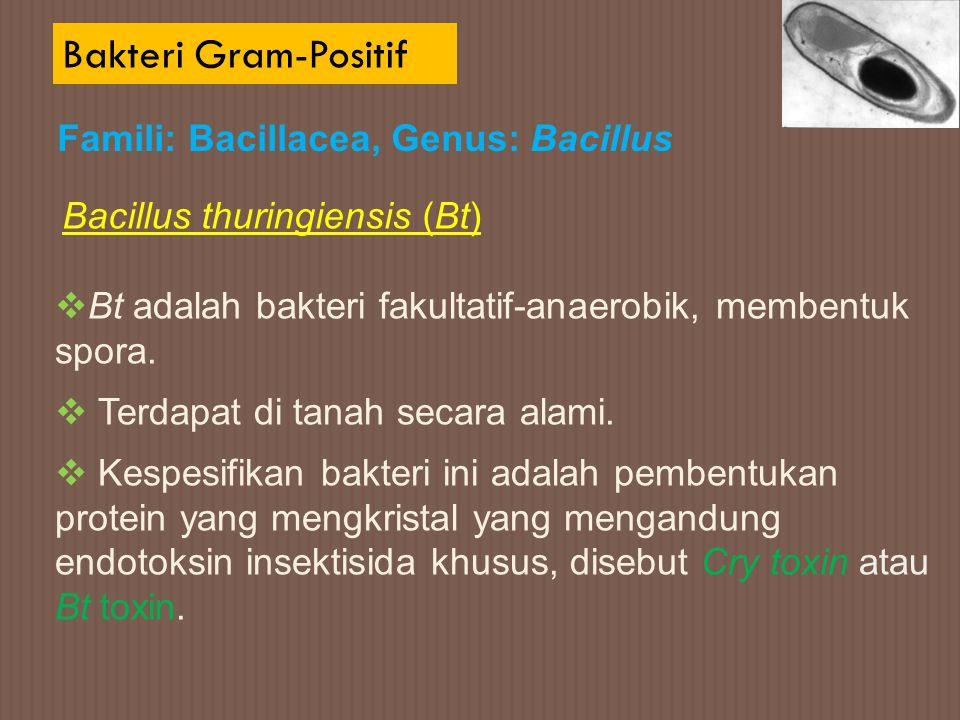 Bakteri Gram-Positif Famili: Bacillacea, Genus: Bacillus