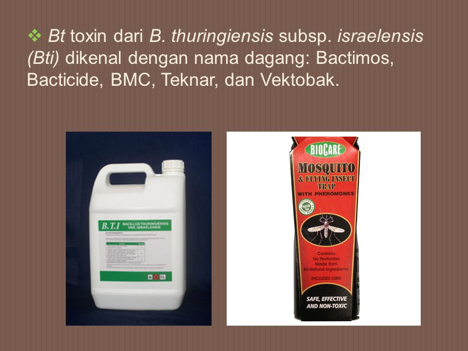 Bt toxin dari B. thuringiensis subsp