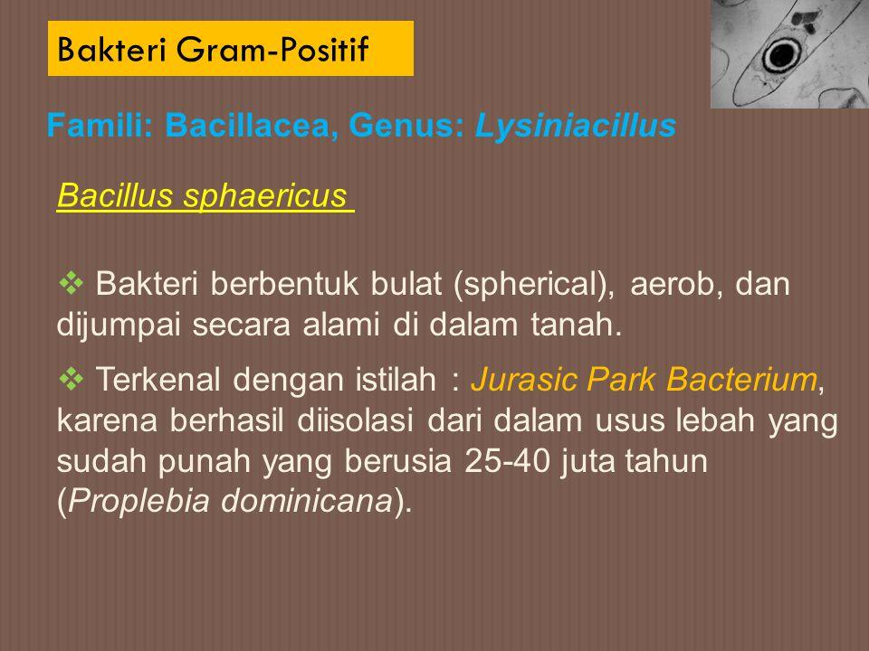 Bakteri Gram-Positif Famili: Bacillacea, Genus: Lysiniacillus