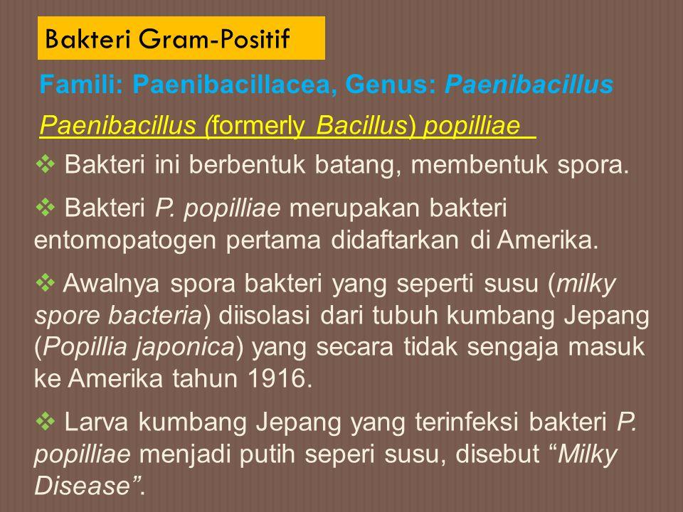 Bakteri Gram-Positif Famili: Paenibacillacea, Genus: Paenibacillus