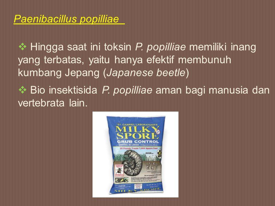 Paenibacillus popilliae