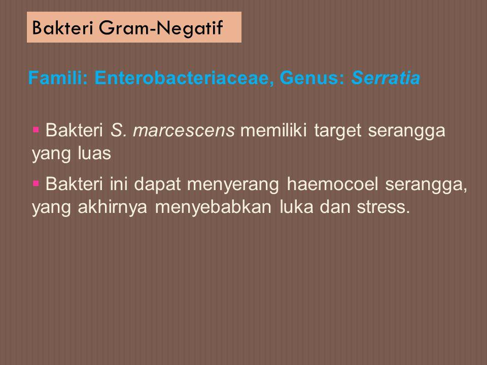 Bakteri Gram-Negatif Famili: Enterobacteriaceae, Genus: Serratia