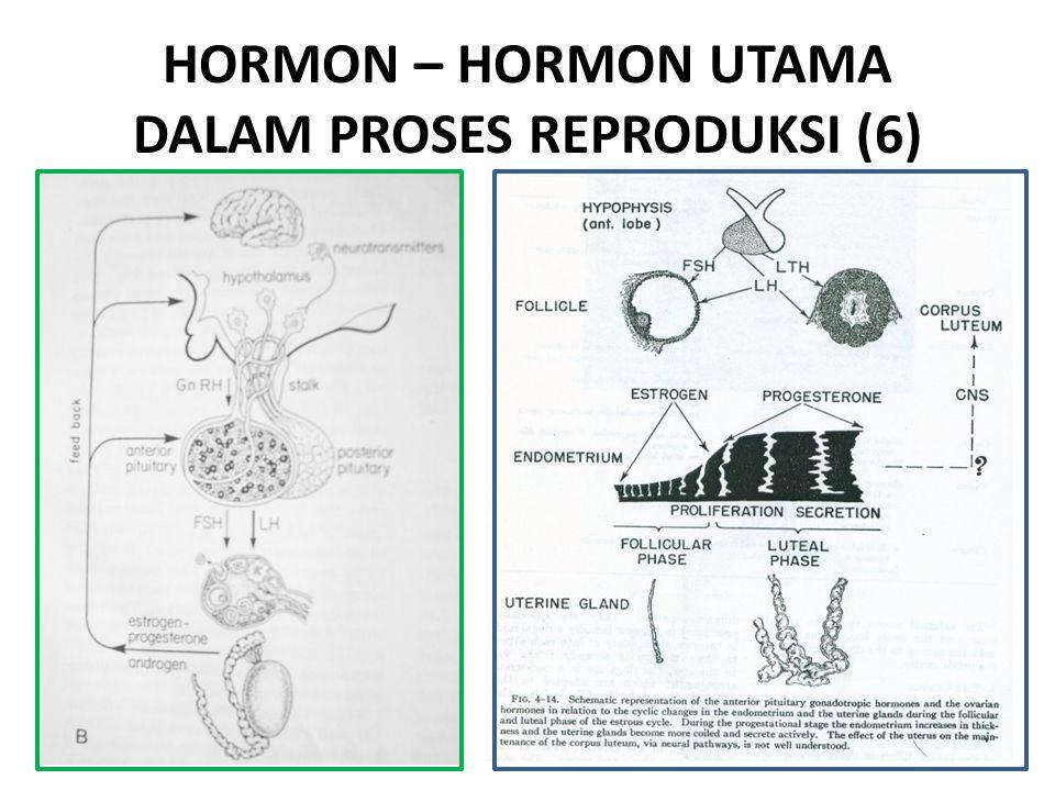 HORMON – HORMON UTAMA DALAM PROSES REPRODUKSI (6)