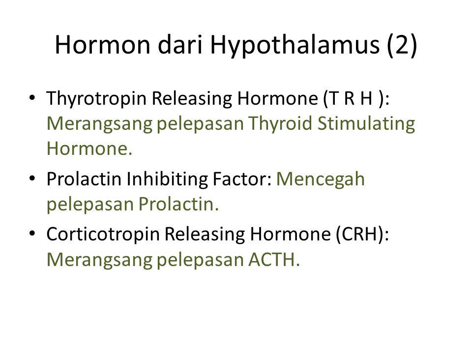 Hormon dari Hypothalamus (2)