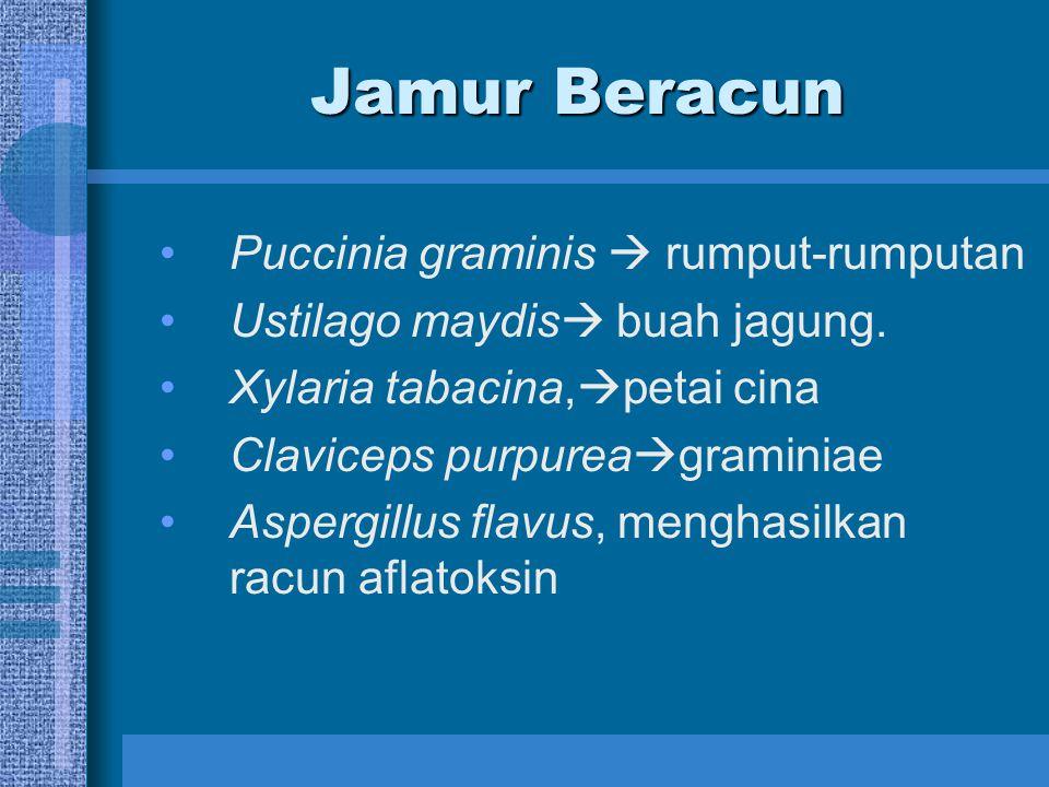 Jamur Beracun Puccinia graminis  rumput-rumputan