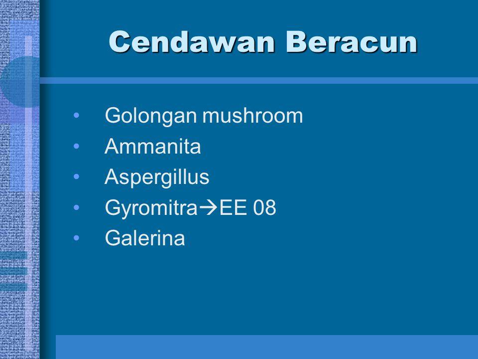 Cendawan Beracun Golongan mushroom Ammanita Aspergillus