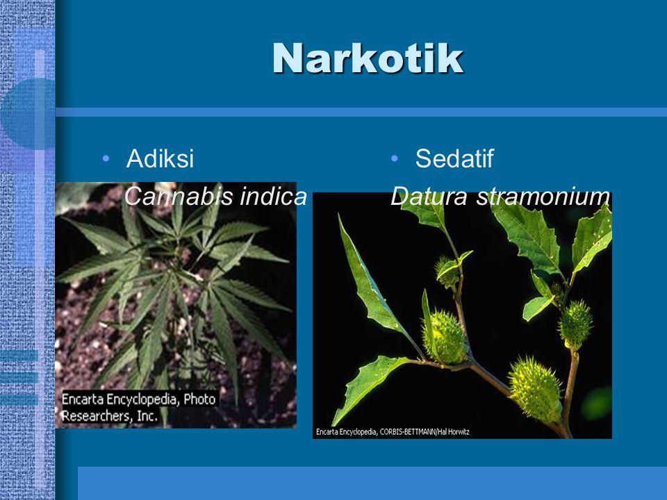 Narkotik Adiksi Cannabis indica Sedatif Datura stramonium