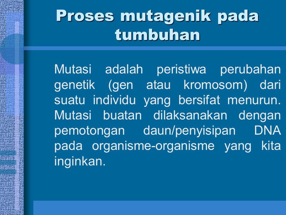 Proses mutagenik pada tumbuhan