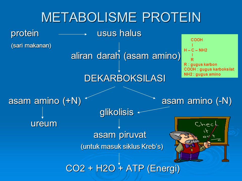 METABOLISME PROTEIN (sari makanan) aliran darah (asam amino)