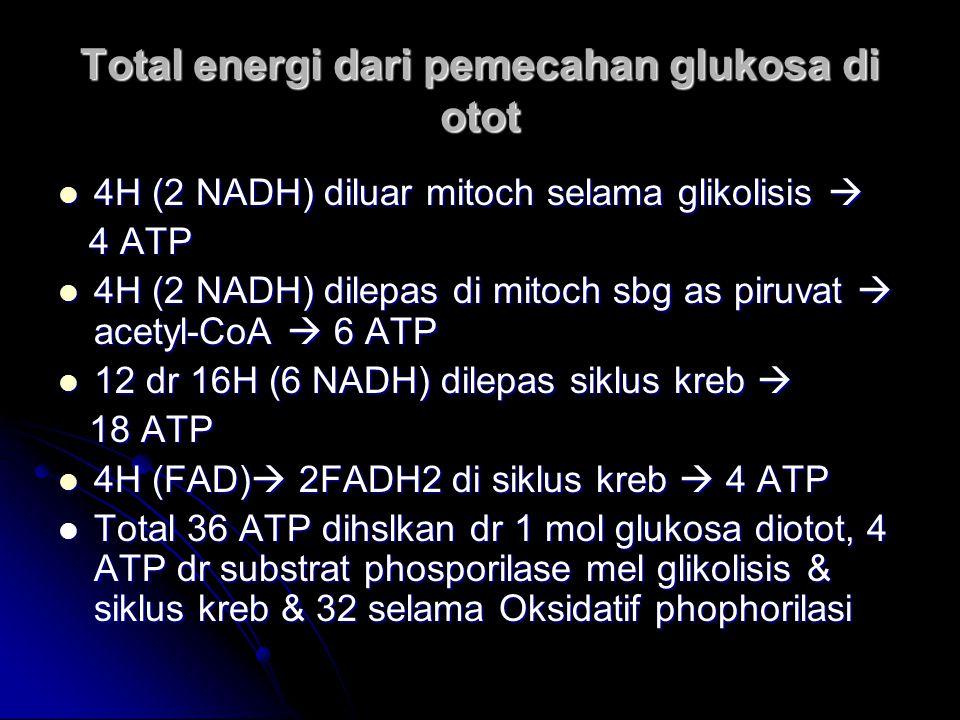 Total energi dari pemecahan glukosa di otot