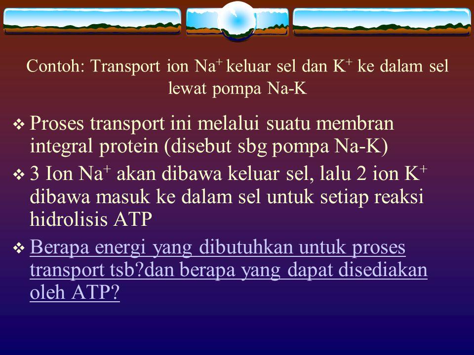Contoh: Transport ion Na+ keluar sel dan K+ ke dalam sel lewat pompa Na-K