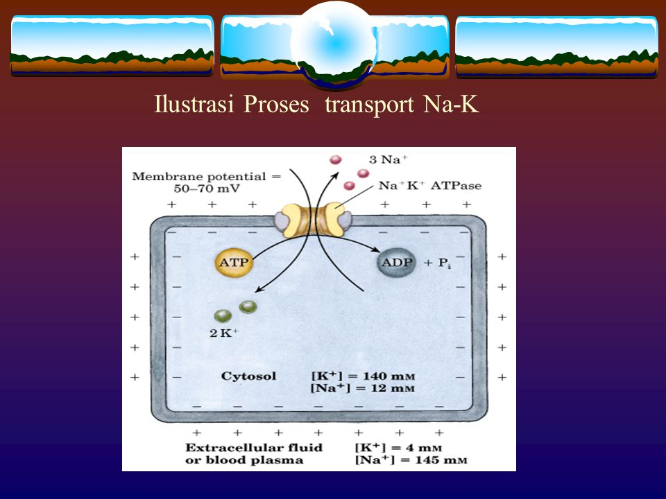 Ilustrasi Proses transport Na-K