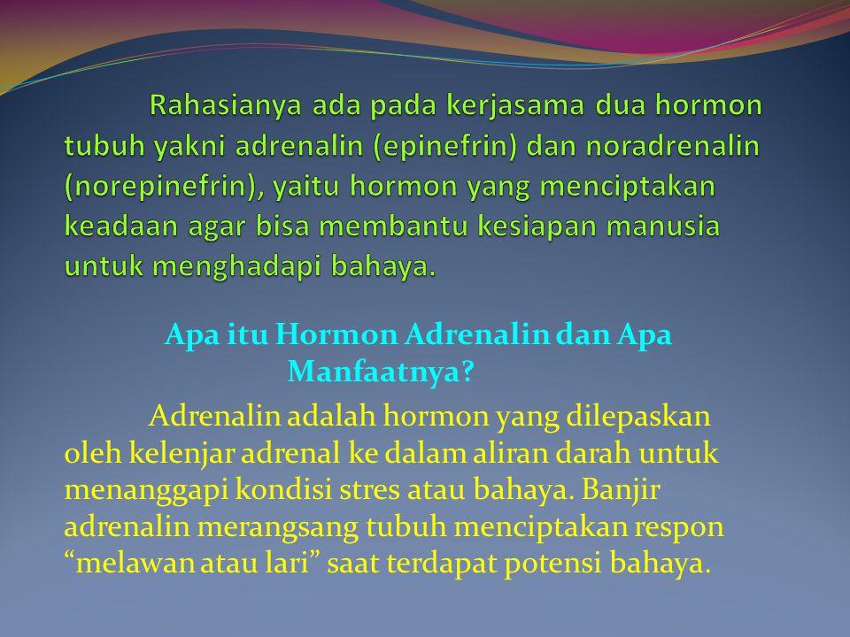 Apa itu Hormon Adrenalin dan Apa Manfaatnya