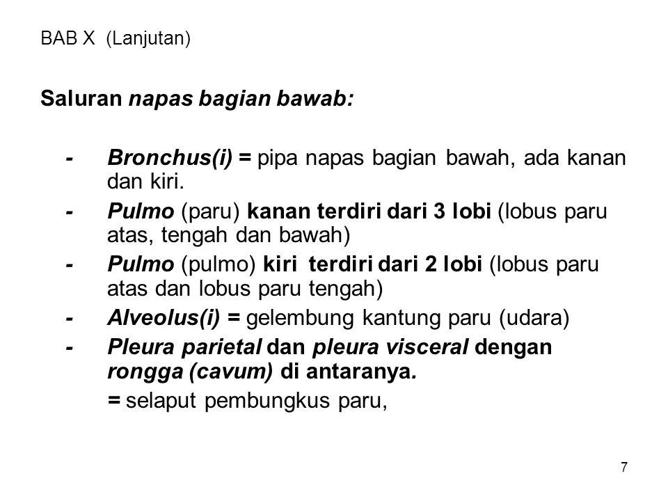 Saluran napas bagian bawab: