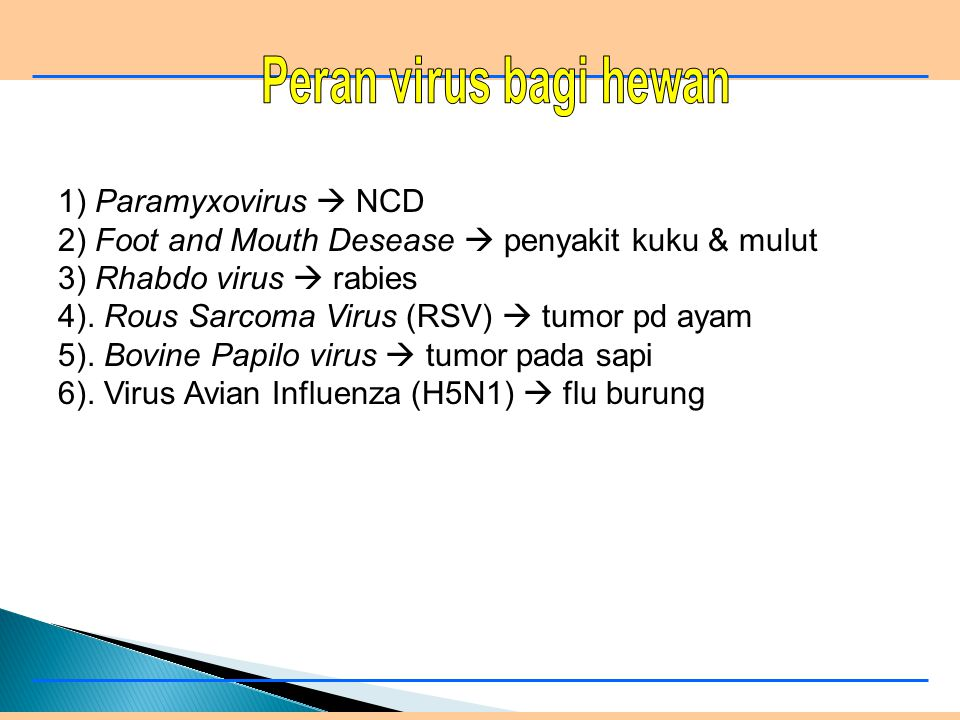 2) Foot and Mouth Desease  penyakit kuku & mulut