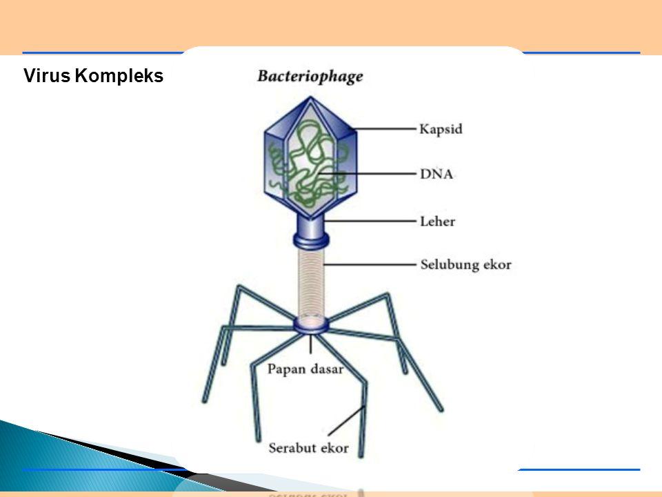 Virus Kompleks