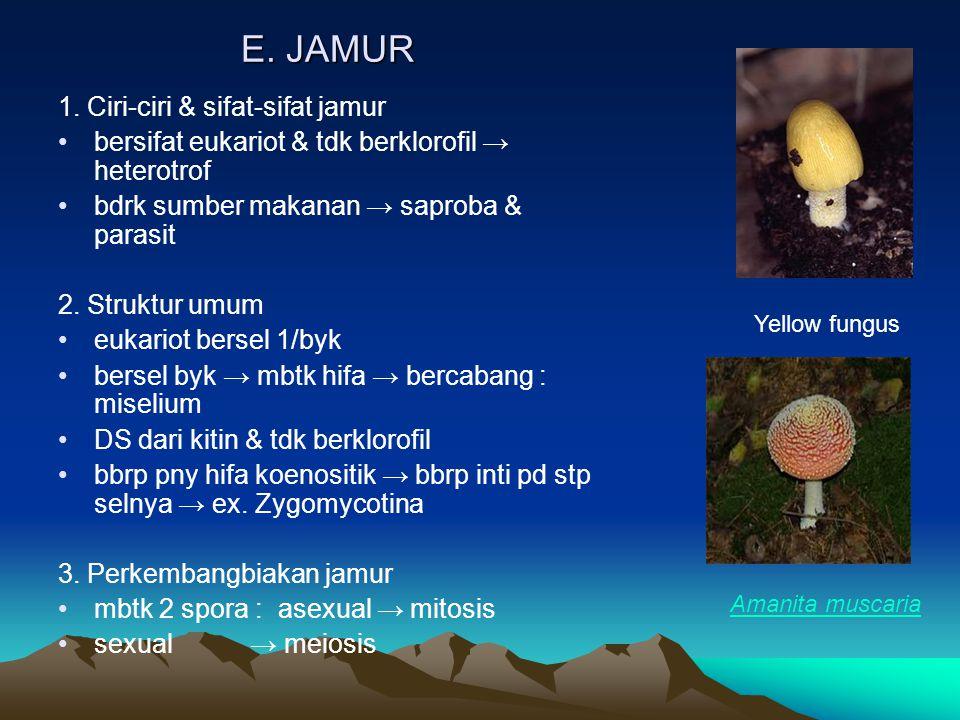 E. JAMUR 1. Ciri-ciri & sifat-sifat jamur