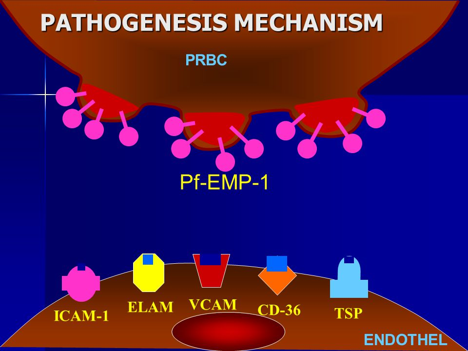 PATHOGENESIS MECHANISM